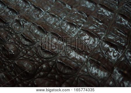 Black crocodile leather texture. High resolution photo.