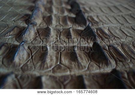 Black crocodile skin texture.for ugotovlena leather products