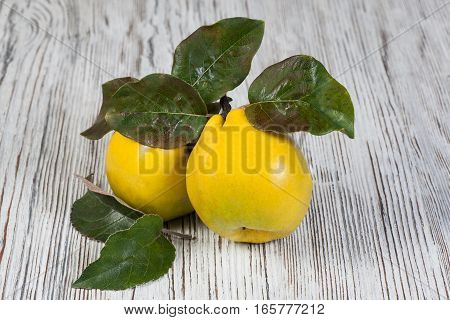 quince on a vintage wooden table (fruits)
