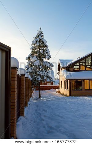 private house yard winter tree. rural life in nature. cottage village. verticale shot