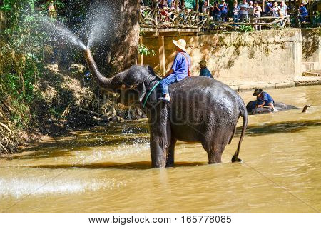 Thailand Elephant Squirting Water At Spectators