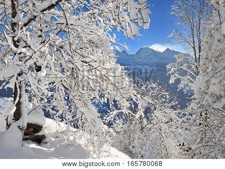 mountain between snowy trees under blue sky