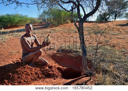 KALAHARI NAMIBIA - JAN 24 2016: Bushmen hunter takes an ostrich egg with water. San people also known as Bushmen are members of various indigenous hunter-gatherer peoples of Southern Africa