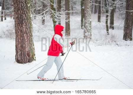 GRODNO BELARUS - JANUARY 15 2017. Elderly woman skiing in the snow-covered forest.