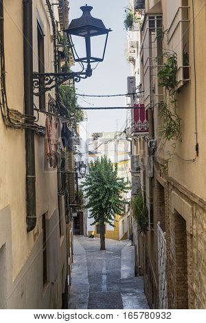 Jaen (Andalucia Spain): an old typical street with a tree in the middle
