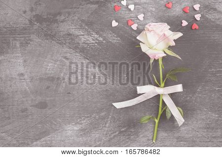 Pink rose with white ribbon on a dark background. Top view copy space. Toning.