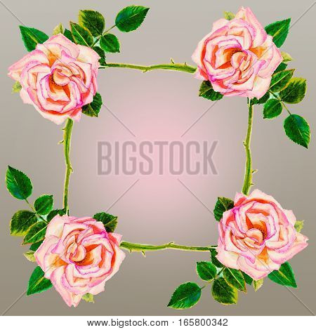 Painting art watercolor flower illustration pink color of rose frame on gray background