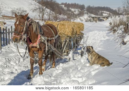 Horse cart with bales of hay in winter in sunny day