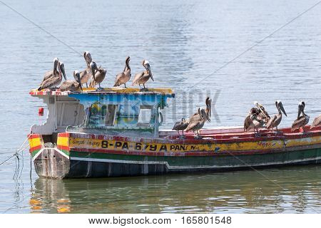 June 15, 2016 Panama City, Panama: pelicans standing on a small rustic fishing boat floating on the water