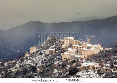 Red Kite soaring over the snow covered ancient mountain village of Speloncato in the Balagne region of Corsica