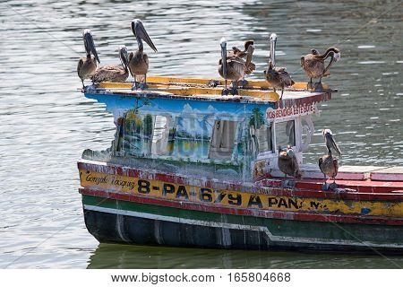 June 15, 2016 Panama City Panama: small rustic fishing boat floating on the water in front of the fish market with pelicans resting on it