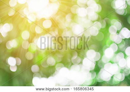 Abstract nature blur background blurred tree and bokeh tree.
