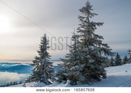 snow-covered fur-tree against the blue sky grows on a hillside