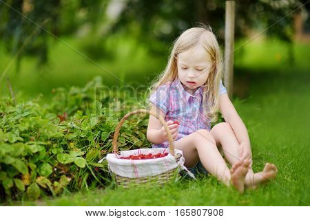Cute Little Girl Picking Fresh Wild Strawberries On Organic Strawberry Farm
