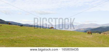 Horses eating grass in hills recorded in region Stara Planina Bulgaria.