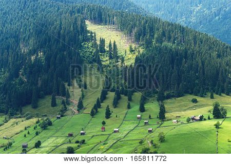 Mountain landscape in bucovina with green fields, pine forest and small houses, romania