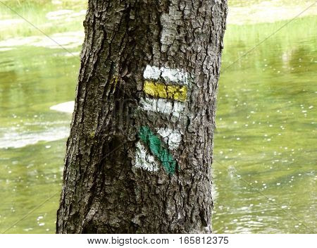 Photo of a tree with trail blazing