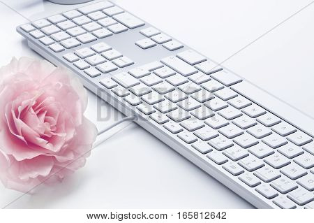 Rose and keyboard computer in a bright and glamorous ambience. Shallow depth of field. Focus on center of keyboard