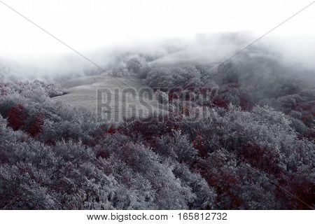 The slope of the mountain with a lawn, a forest covered with frost, frosty trees with crimson autumn leaves, snow-covered slope with forested mountains covered in mist