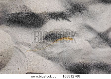 fine sand with shadow from the spikelets, a shadow on the sand from the plant, beige fine clean sand texture sand background