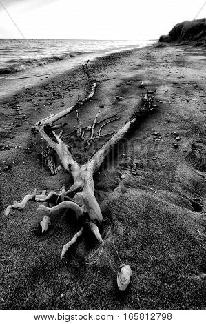 broken tree on the beach in the sand among the shells, broken tree branches on the beach