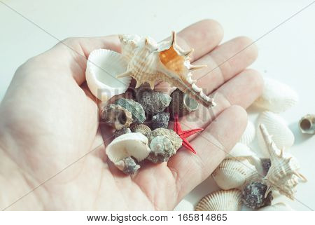 Shell and scallop in hand, closeup, exotic collection