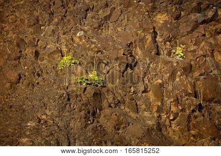 Green plants growing on brown rocks .
