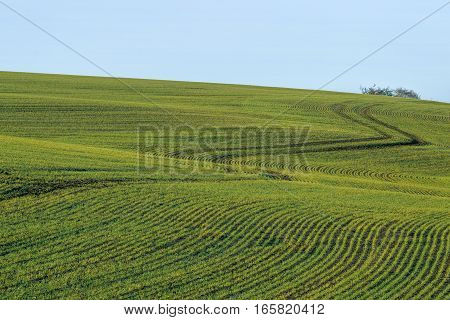 Green field with leading lines to set of trees and blue sky