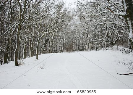Path through a snow covered forest with snow all over