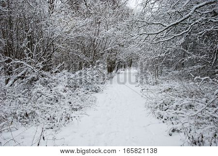 Empty footpath in a forest with snow covered branches all over