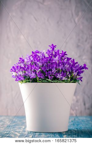 Bright Planter With Purple Bluebells