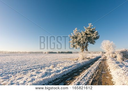 Heavy Rutted Road With Frosted Water In Winter Landscape