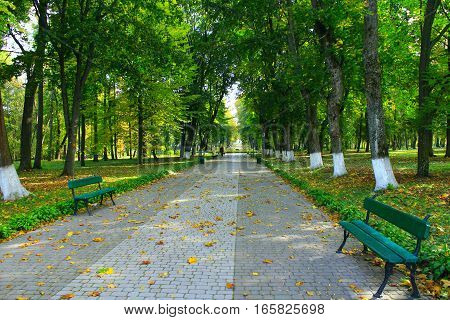 Autumnal park with promenade path big trees and benches