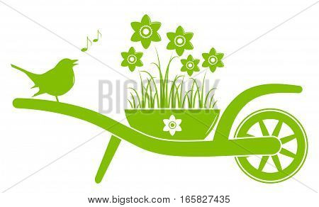 vector wheel barrow with daffodils in pot and singing bird isolated on white background