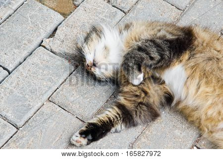 cat sleeps on a stone path in park
