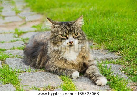 Cat On Stone Path In The Grass
