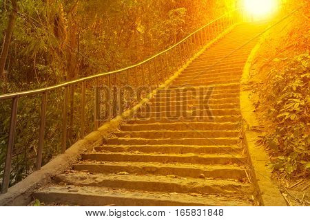 Concrete stair in the forest with sunlight