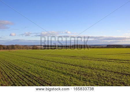 Wheat Field And The Vale Of York
