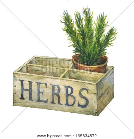 Flower pot with rosemary in an old wooden crate garden. Hand drawn watercolor painting on white background.