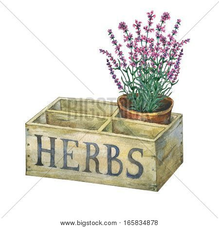 Flower pot with lavender in an old wooden crate garden. Hand drawn watercolor painting on white background.