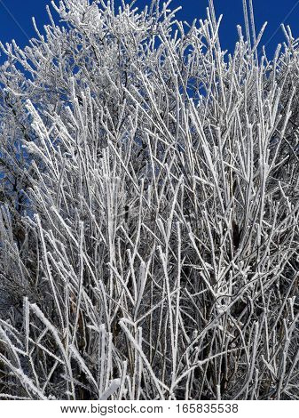 winter frozen tree branches in the Czech Republic
