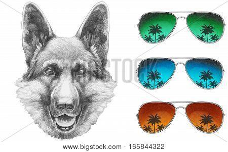 Portrait of German Shepherd with mirror sunglasses. Hand drawn illustration.
