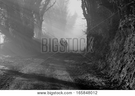 Black and white image of a couple walking through a foggy forest