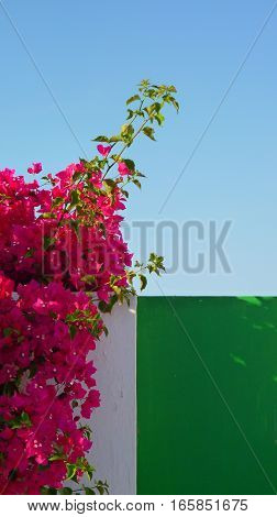 Summer flowers in little house in Portugal