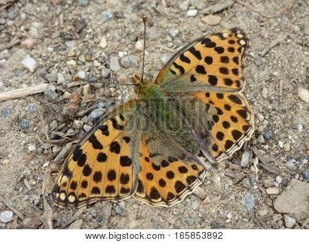 Photo of an orange butterfly sitting on the ground