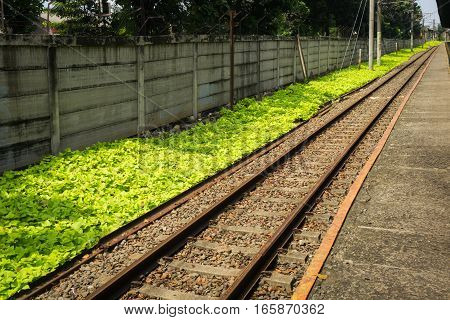 straight railway for commuter line with green bushes photo taken in Depok Indonesia java