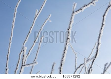 Rime ice on a tree branches under blue sky