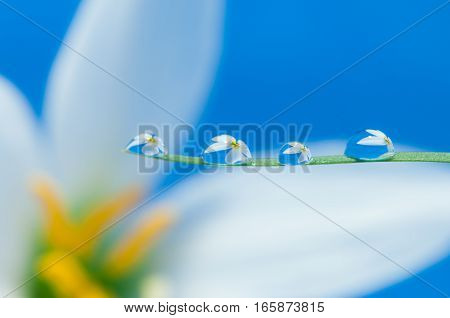 Drop of water on the grass, flower background