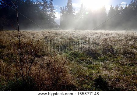 Bright sun shines through the trees as the morning mist rises from a field. The melting frost glistens like a million diamonds on the grass and bushes in Aylard Farm East Sooke Park Vancouver Island.