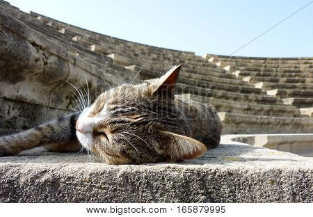 Sleeping Stray Cat Enjoying the Sun in a Amphitheatre